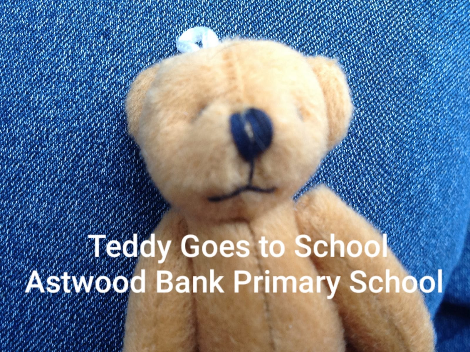 teddy goes to school LOGO